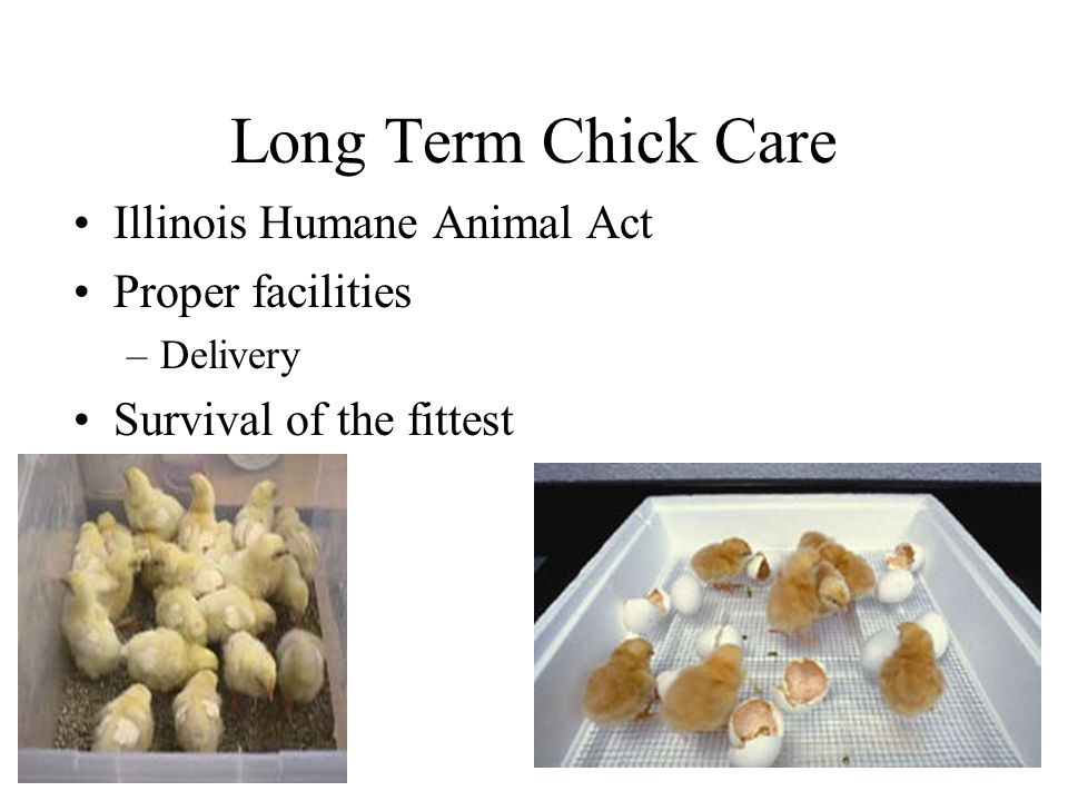 Long Term Chick Care Illinois Humane Animal Act Proper facilities