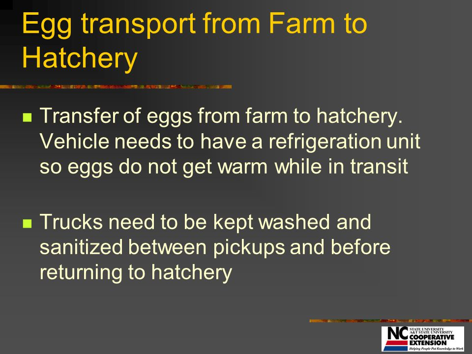 Egg transport from Farm to Hatchery