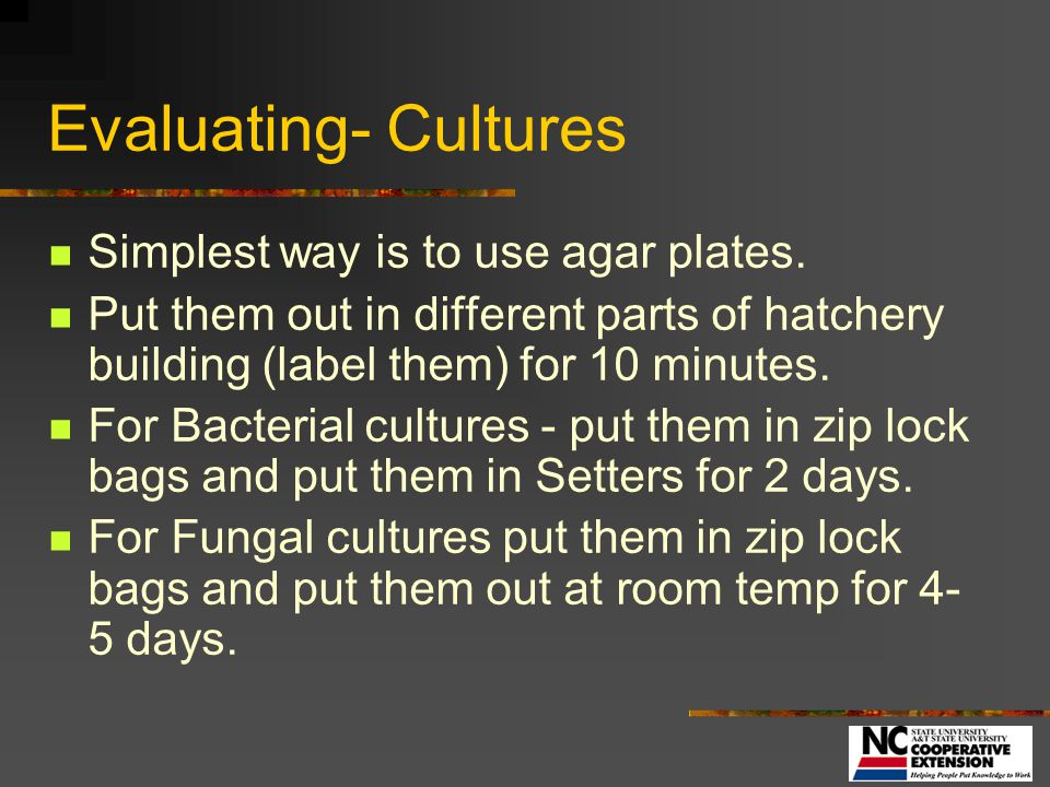 Evaluating- Cultures Simplest way is to use agar plates.