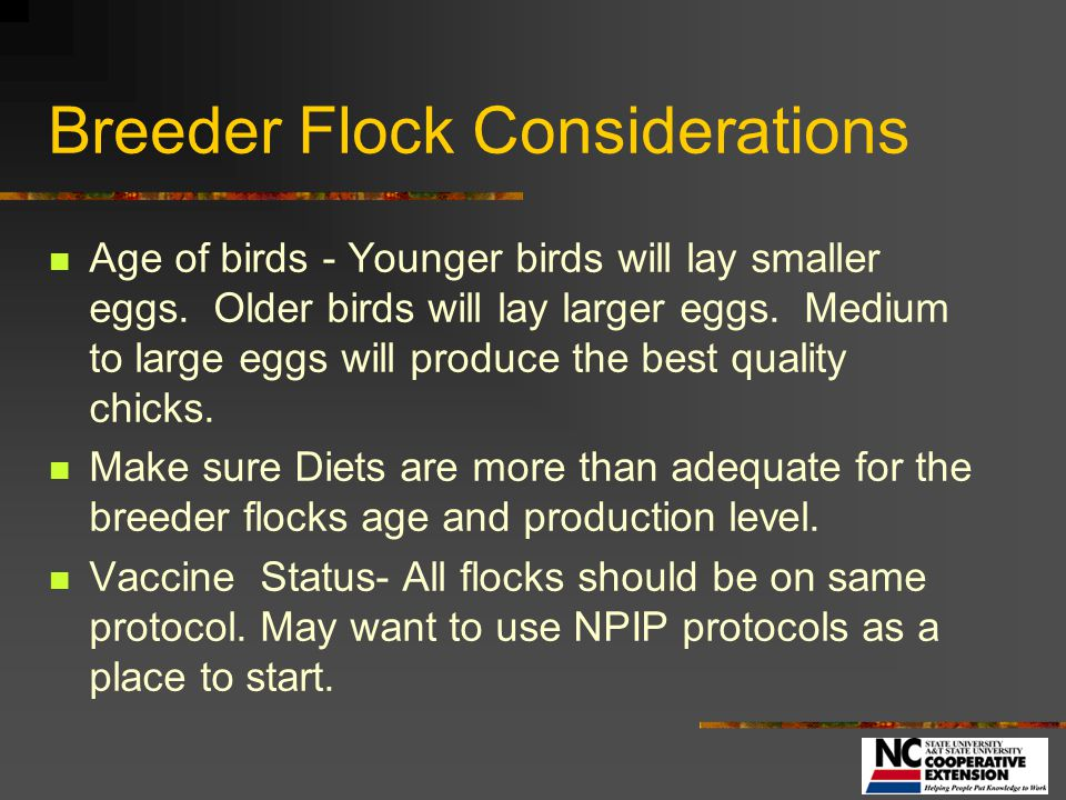 Breeder Flock Considerations