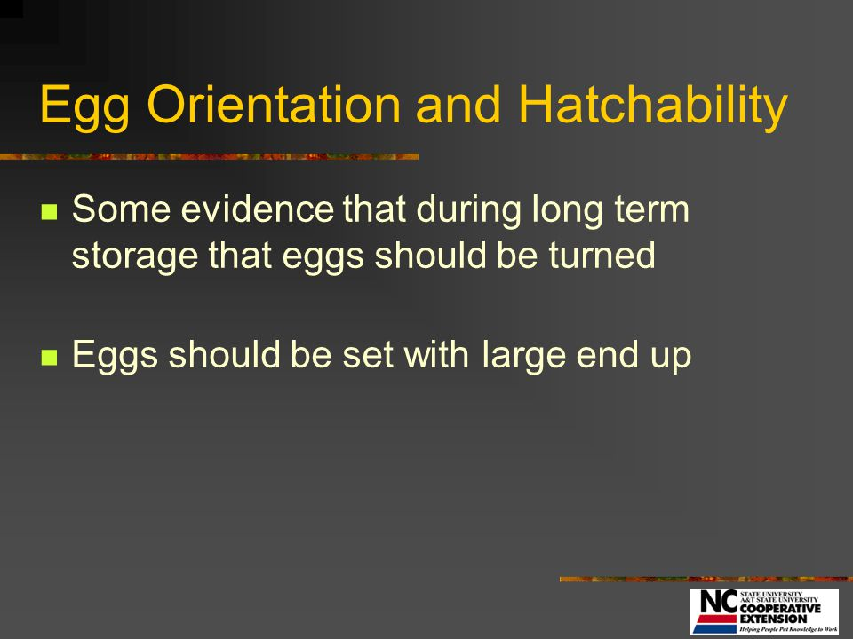 Egg Orientation and Hatchability