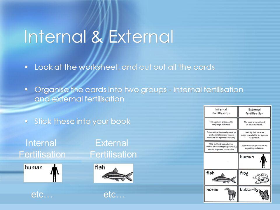 Internal & External Internal Fertilisation External Fertilisation etc…