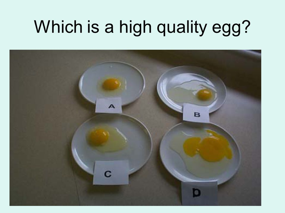 Which is a high quality egg