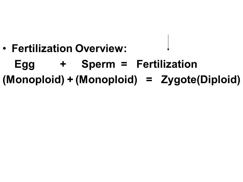 Fertilization Overview: