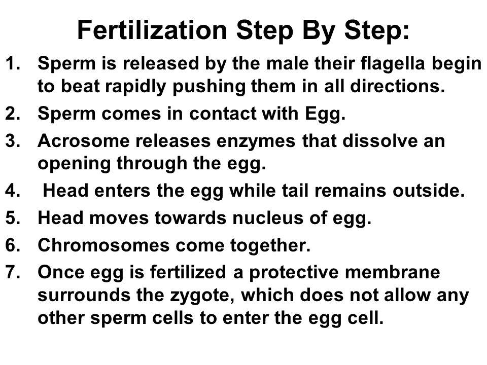 Fertilization Step By Step: