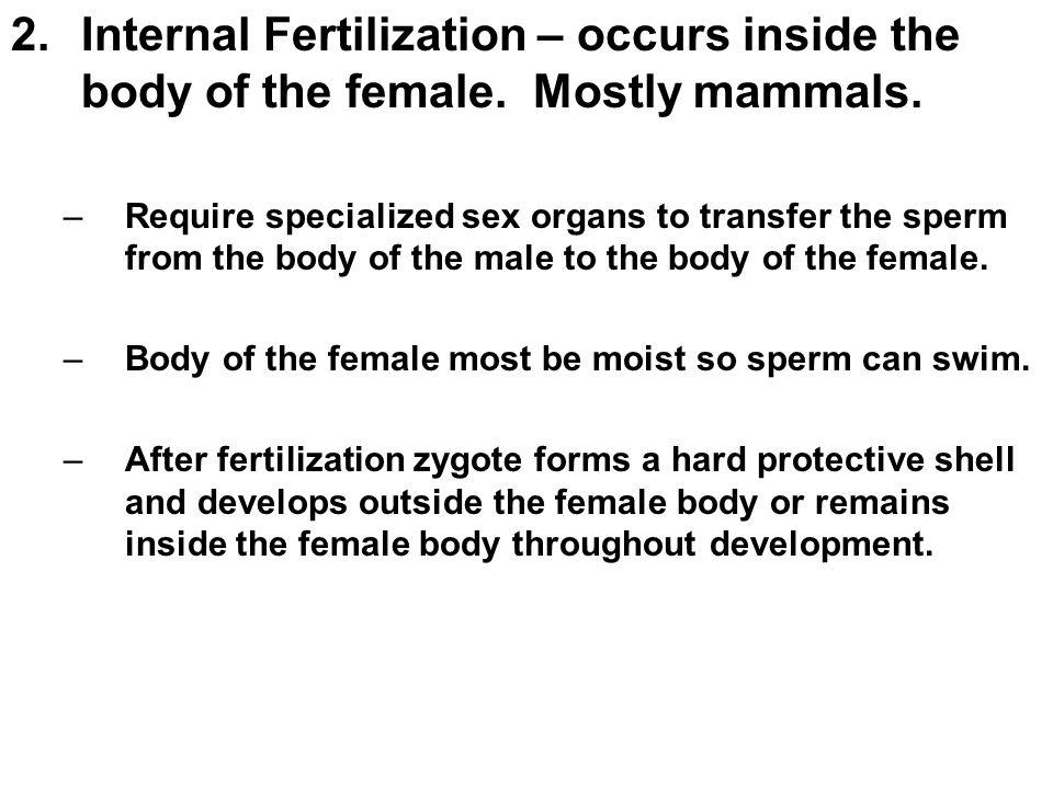 Internal Fertilization – occurs inside the body of the female