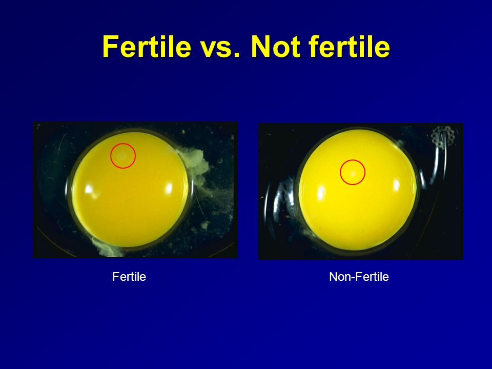 Fertile vs. Not fertile Fertile Non-Fertile