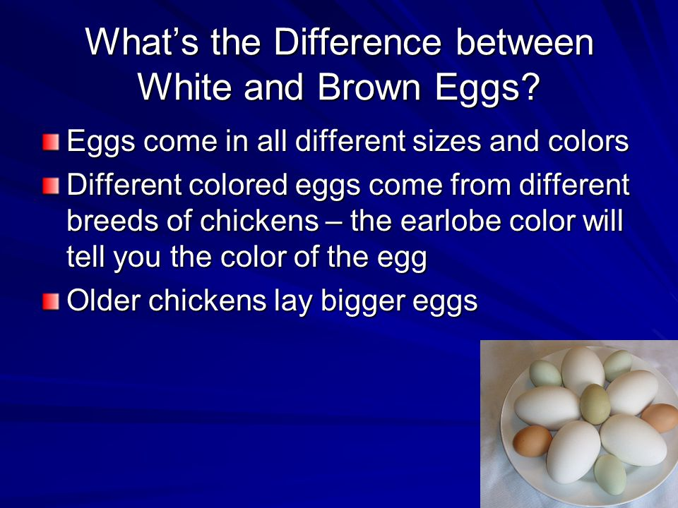 What's the Difference between White and Brown Eggs