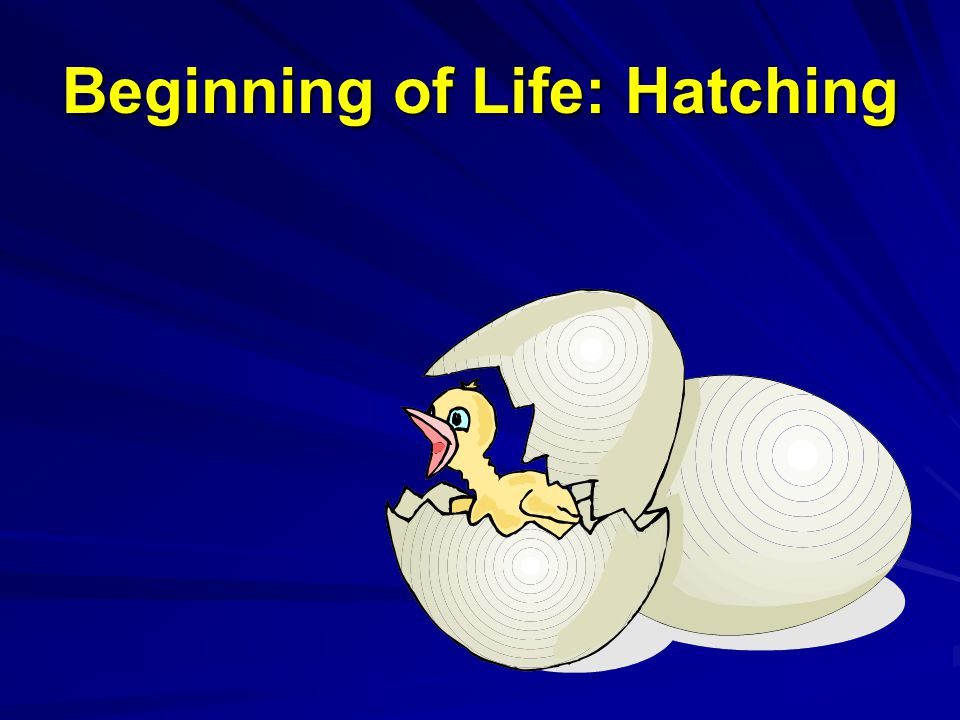 Beginning of Life: Hatching