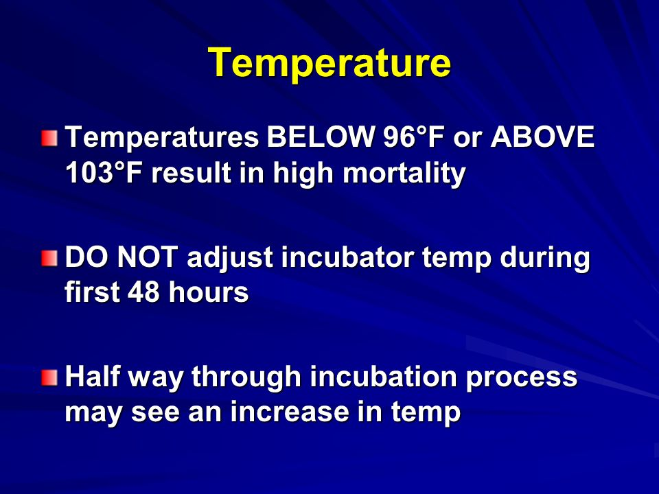 Temperature Temperatures BELOW 96°F or ABOVE 103°F result in high mortality. DO NOT adjust incubator temp during first 48 hours.
