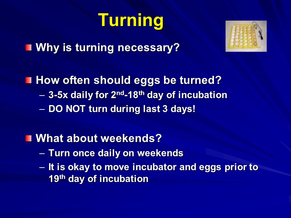 Turning Why is turning necessary How often should eggs be turned