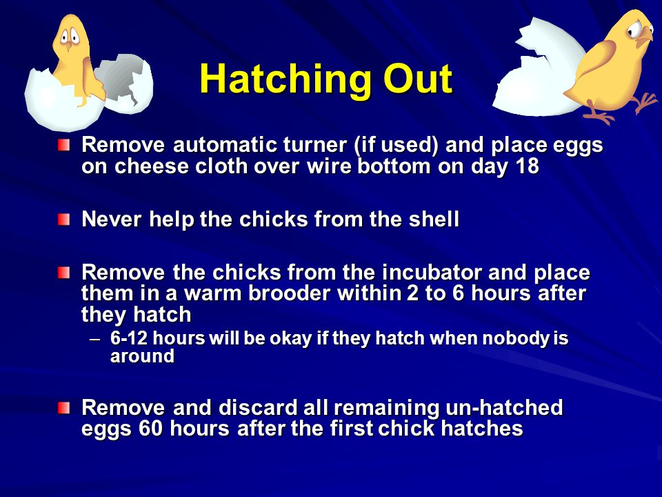 Hatching Out Remove automatic turner (if used) and place eggs on cheese cloth over wire bottom on day 18.