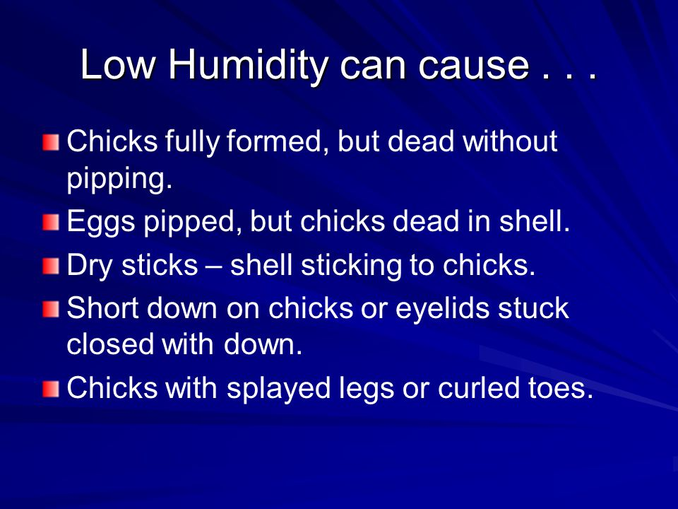 Low Humidity can cause Chicks fully formed, but dead without pipping. Eggs pipped, but chicks dead in shell.