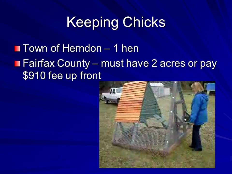Keeping Chicks Town of Herndon – 1 hen
