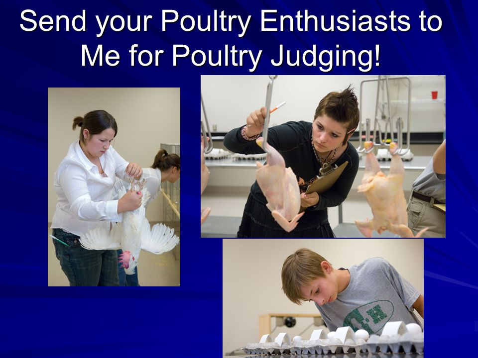 Send your Poultry Enthusiasts to Me for Poultry Judging!