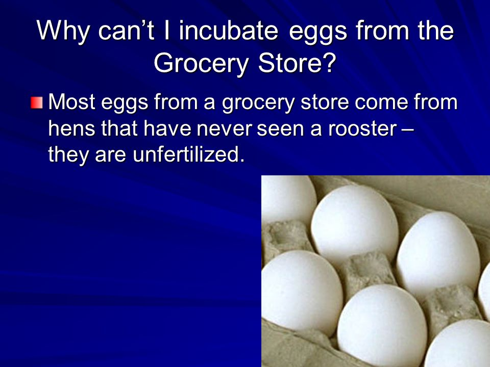 Why can't I incubate eggs from the Grocery Store