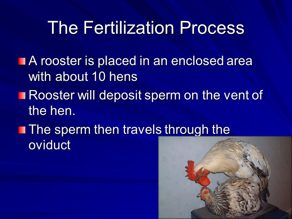 The Fertilization Process