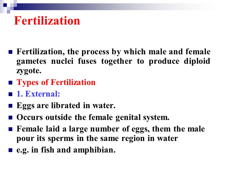 Fertilization Fertilization, the process by which male and female gametes nuclei fuses together to produce diploid zygote.