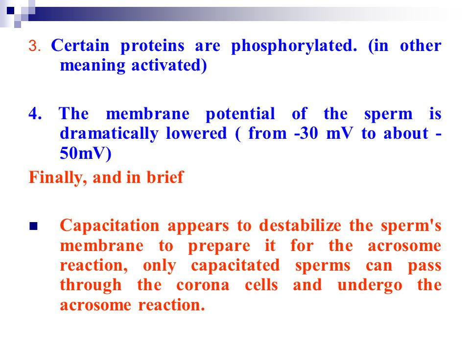3. Certain proteins are phosphorylated. (in other meaning activated)
