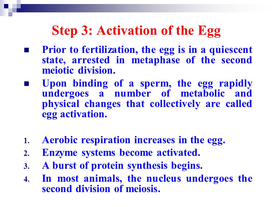 Step 3: Activation of the Egg
