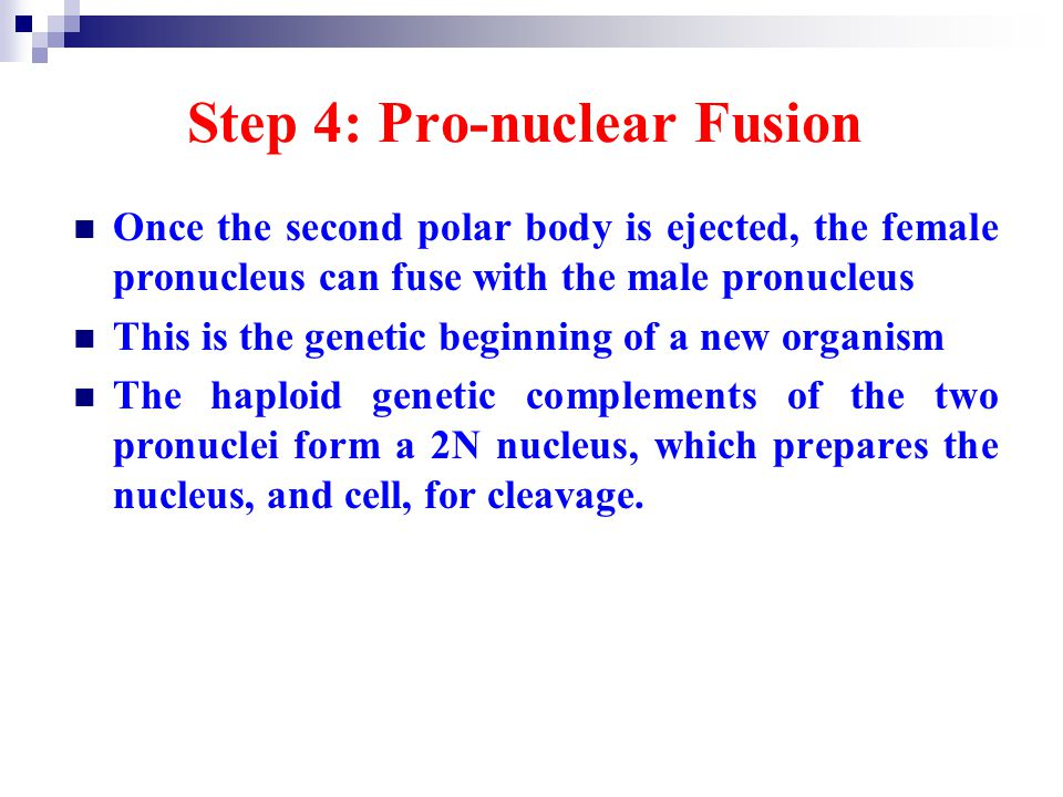 Step 4: Pro-nuclear Fusion