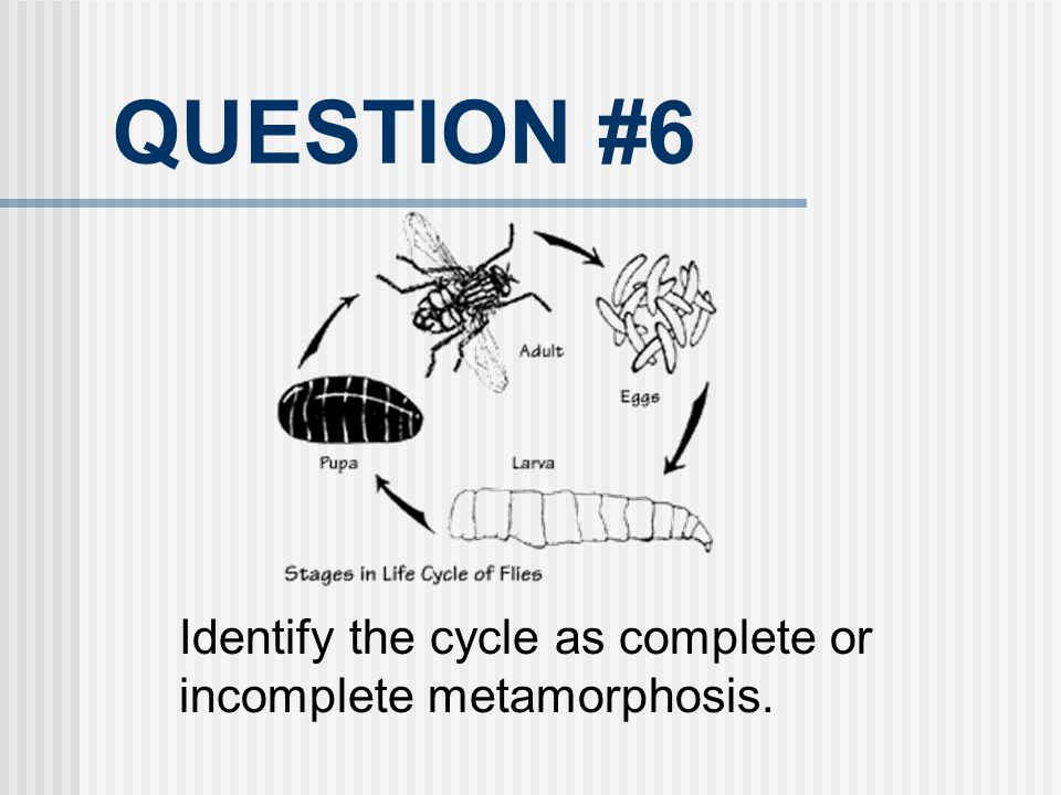 QUESTION #6 Identify the cycle as complete or incomplete metamorphosis.