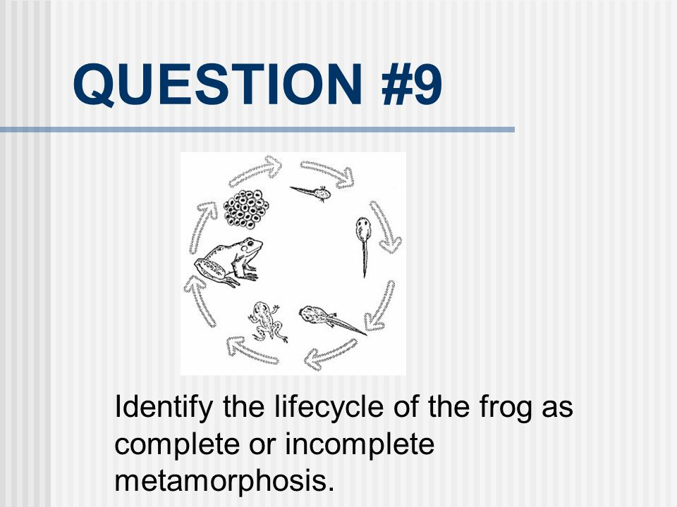 QUESTION #9 Identify the lifecycle of the frog as complete or incomplete metamorphosis.