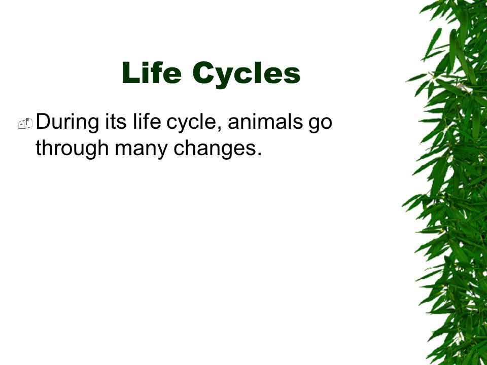 Life Cycles During its life cycle, animals go through many changes.