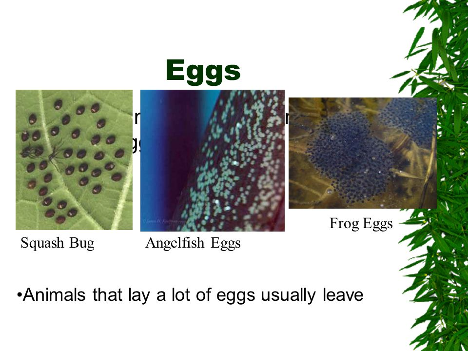Eggs Different kinds of animals produce different eggs.