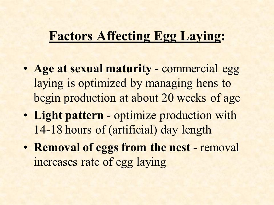 Factors Affecting Egg Laying: