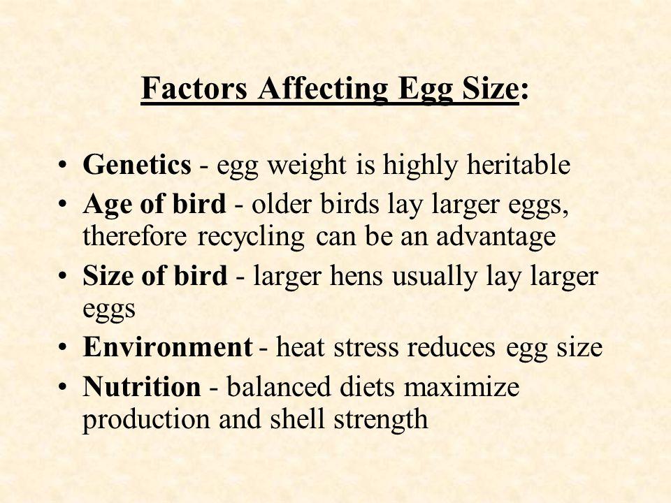 Factors Affecting Egg Size:
