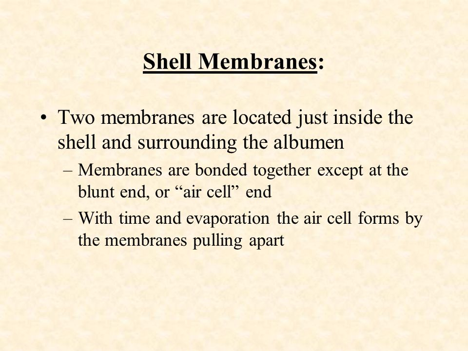 Shell Membranes: Two membranes are located just inside the shell and surrounding the albumen.