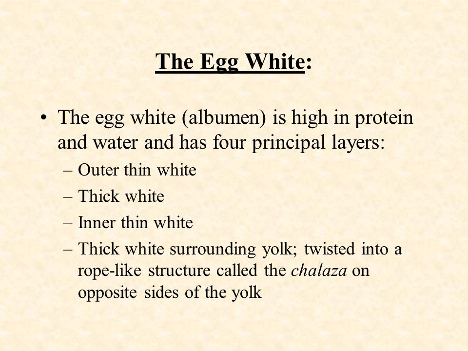 The Egg White: The egg white (albumen) is high in protein and water and has four principal layers: Outer thin white.