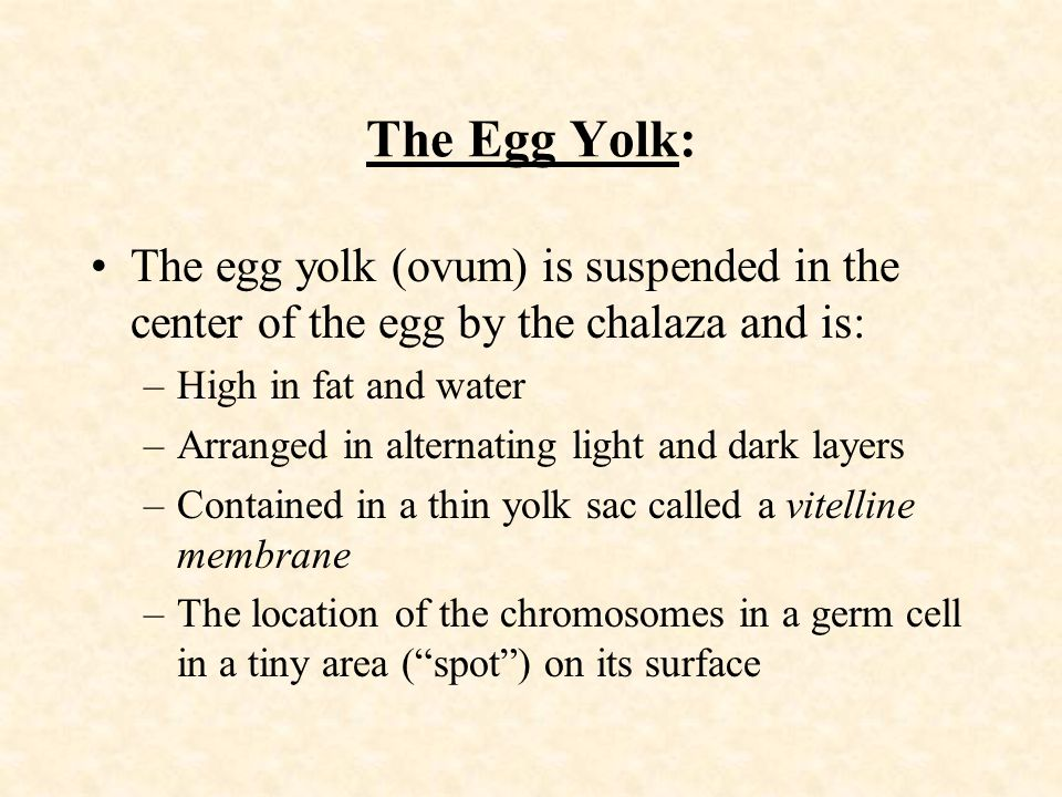 The Egg Yolk: The egg yolk (ovum) is suspended in the center of the egg by the chalaza and is: High in fat and water.