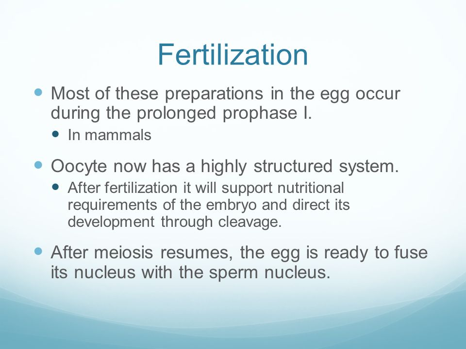 Fertilization Most of these preparations in the egg occur during the prolonged prophase I. In mammals.