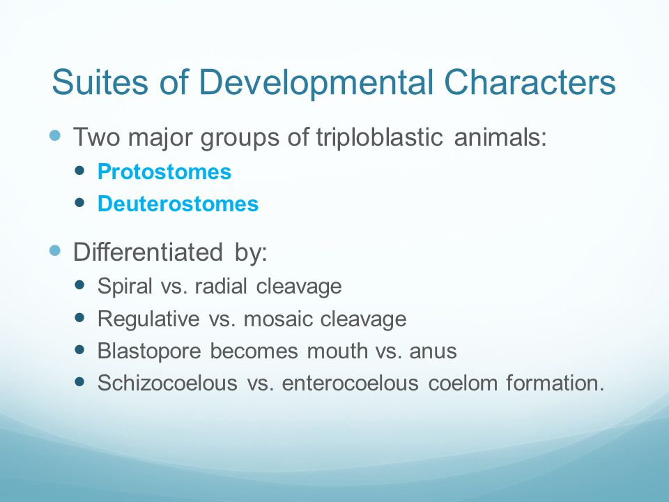 Suites of Developmental Characters