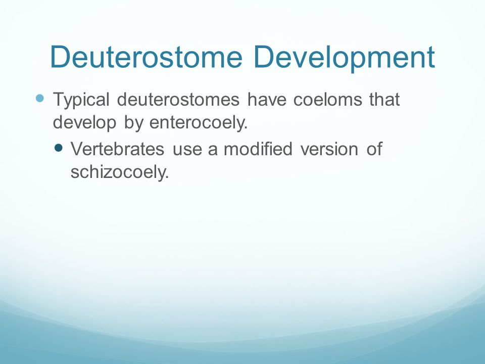 Deuterostome Development