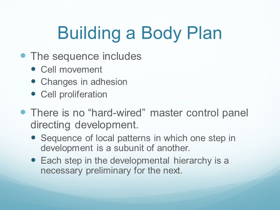 Building a Body Plan The sequence includes