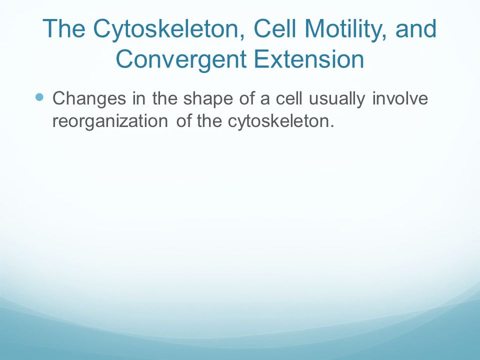 The Cytoskeleton, Cell Motility, and Convergent Extension