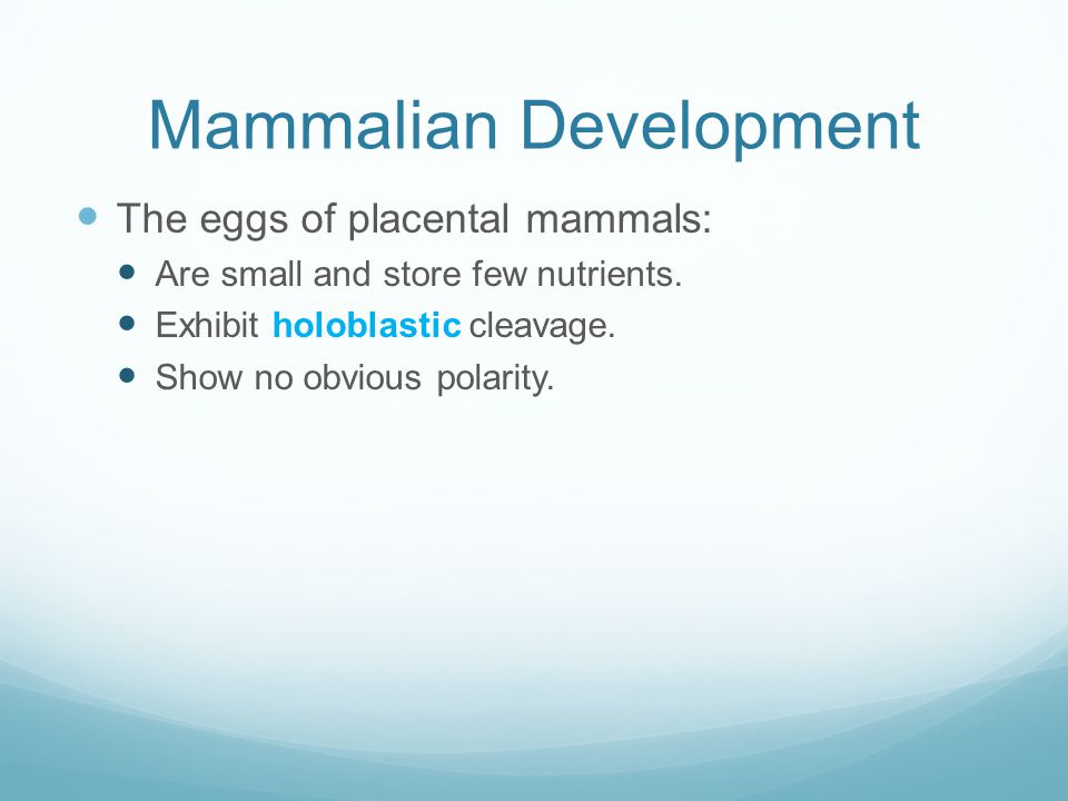 Mammalian Development