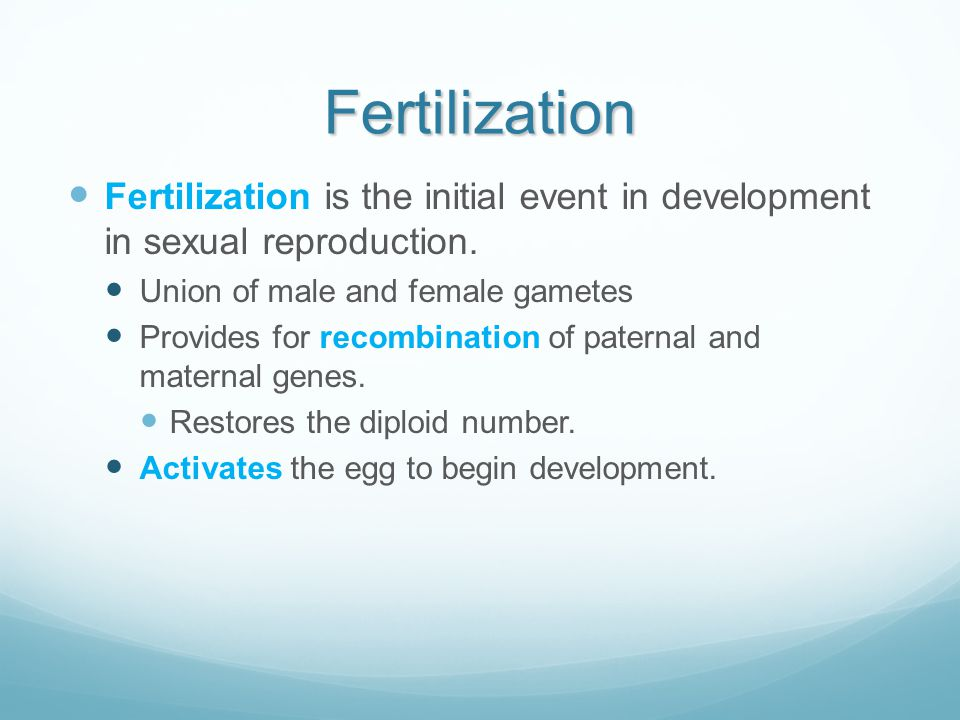 Fertilization Fertilization is the initial event in development in sexual reproduction. Union of male and female gametes.