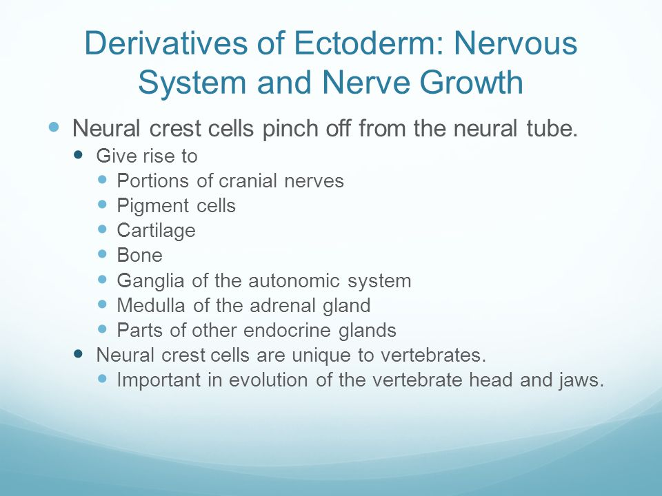 Derivatives of Ectoderm: Nervous System and Nerve Growth