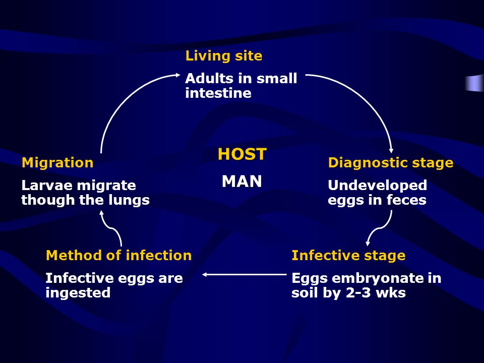 HOST MAN Living site Adults in small intestine Migration