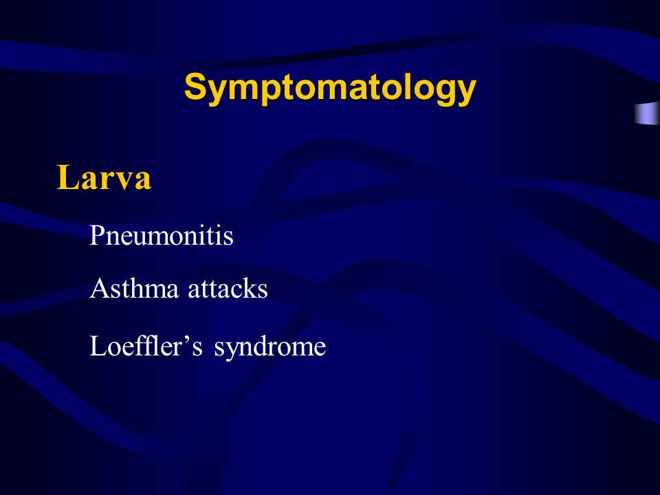 Symptomatology Larva Pneumonitis Asthma attacks Loeffler's syndrome