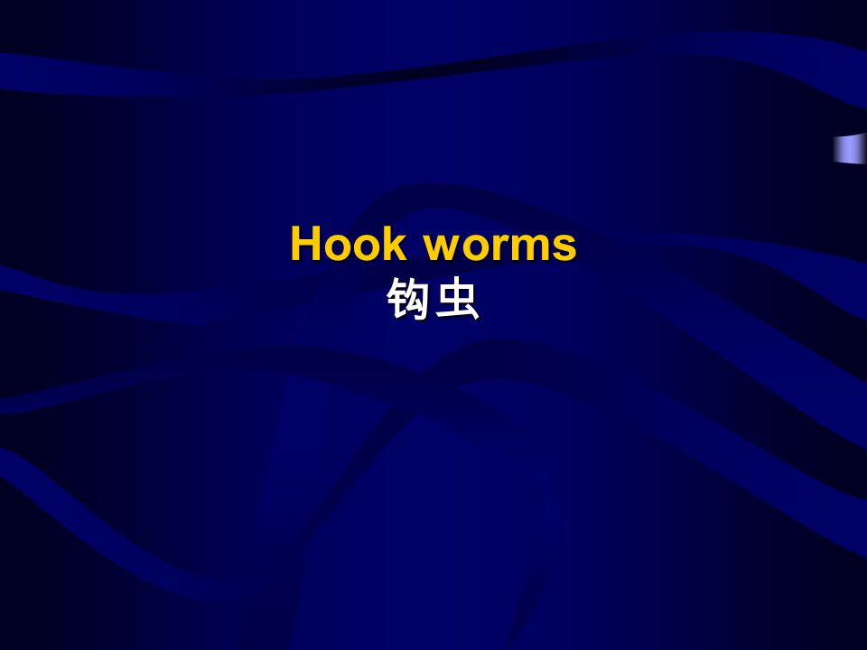 Hook worms 钩虫