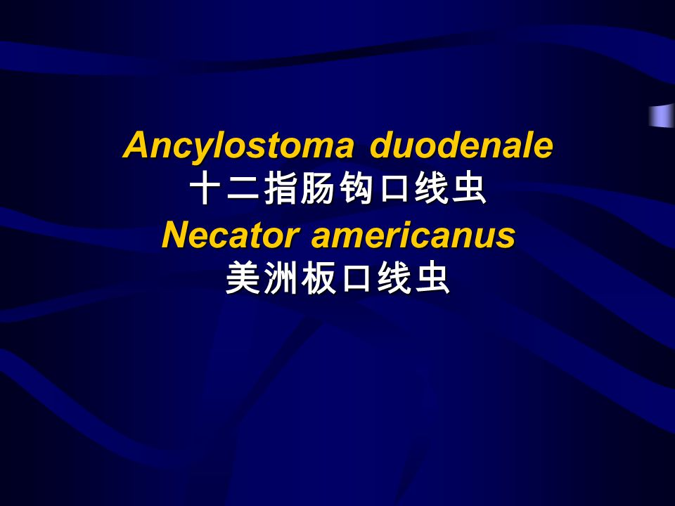 Ancylostoma duodenale 十二指肠钩口线虫 Necator americanus 美洲板口线虫