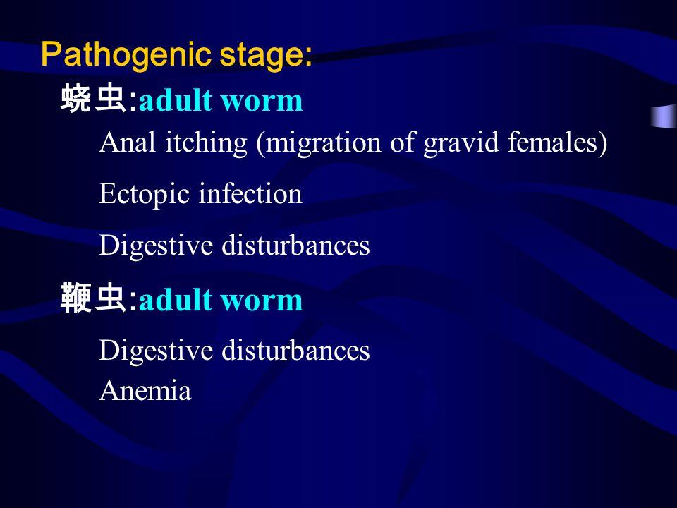 Pathogenic stage: 蛲虫:adult worm 鞭虫:adult worm