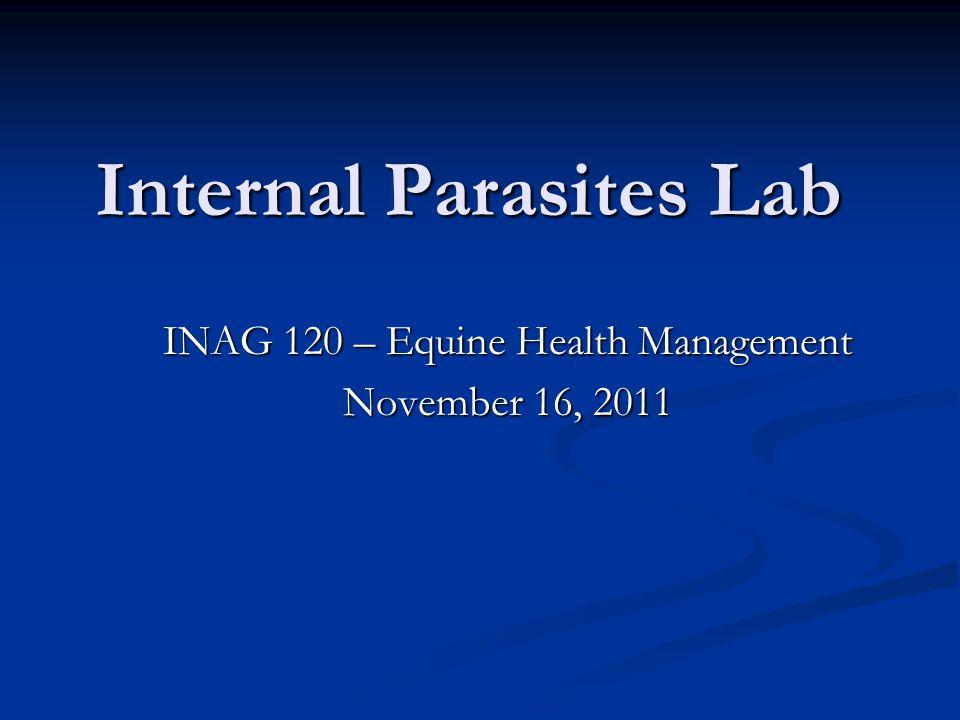 Internal Parasites Lab
