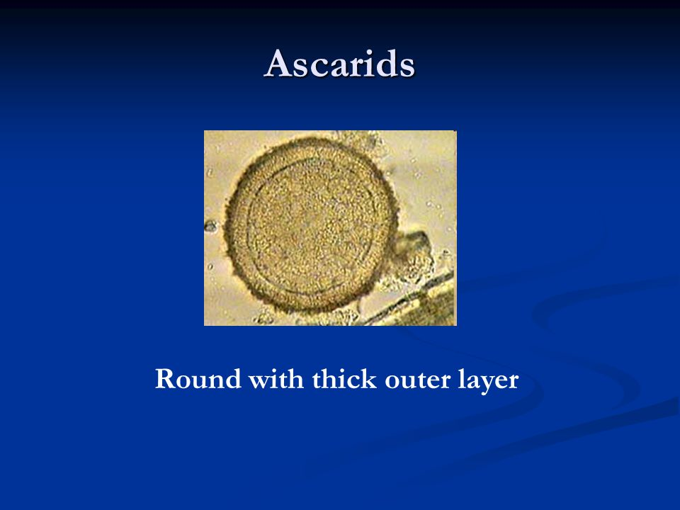 Ascarids Round with thick outer layer