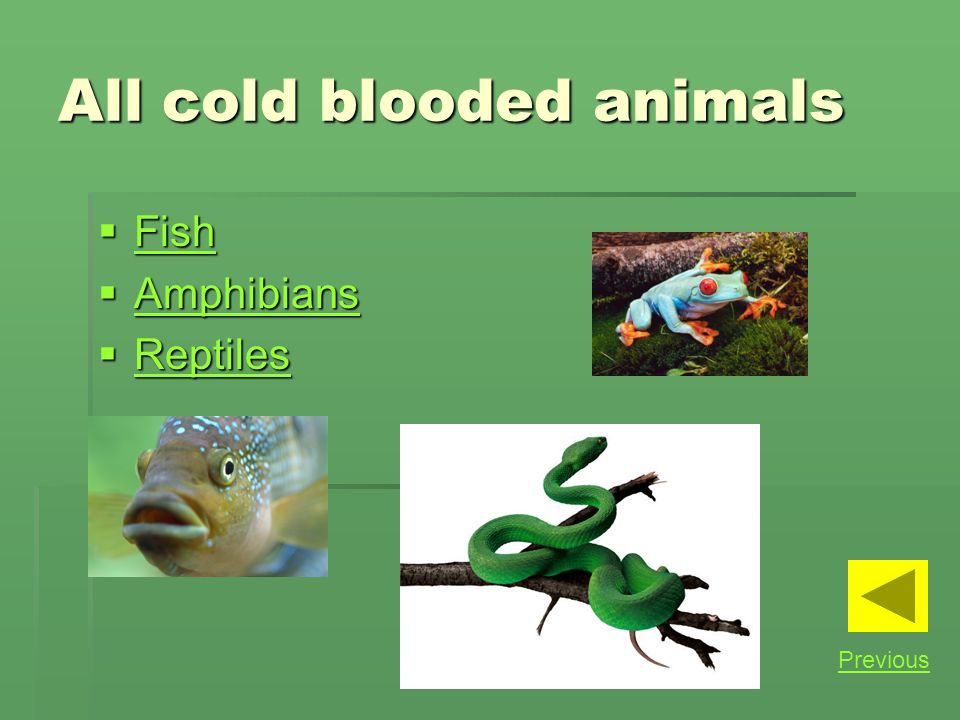 All cold blooded animals